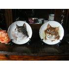 Тарелки Англия коты