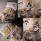 Миллионолетние ископаемые с морского дна,- самое древнее из всего того, что тут продаётся_!
