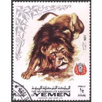 Кошки. Йемен (Королевство) 1969. Лев. Марка из серии