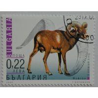 Болгария.2000.муфлон