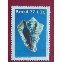 Бразилия 1977г.  Ракушки.