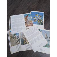 17 фотооткрыток Птицы России и Забайкалья. 1983 год.