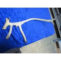 Рог Северного оленя, 49 см(1).