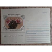1983 не маркированный конверт Маммиллярия