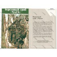 Буклет главкоопинформрекламы - березовый гриб ..чага.. 1984 г.