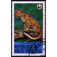 Кошки. Верхняя Вольта. 1979. Леопард. Марка из серии. Гаш.