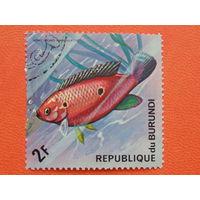 Бурунди 1974г. Морская фауна.