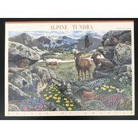 2007 Природа Америки - Альпийская тундра - самоклеющиеся