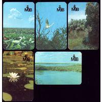 5 календариков МАВ