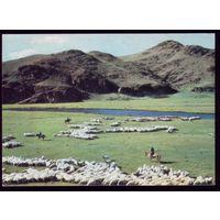 Монголия Пастухи и бараны