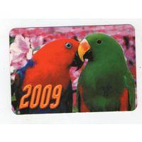 2009 попугаи (9)