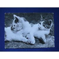 Кошки. Фото.