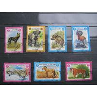 Марки - фауна, Афганистан, слон, кабан, тигр и др. 1984