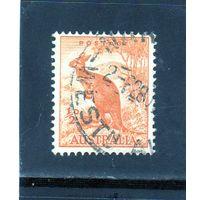 Австралия.Ми-137. Красный кенгуру (Macropus rufus). Серия: Зоологическая. 1937.