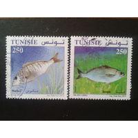 Тунис 2012 рыбы