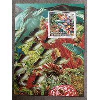 Кот Ди Вуар 2002. Коралловые рыбы