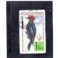 Чехословакия.Ми-1498. Черный дятел (Dryocopus martius). Серия: Лесные и садовые птицы. 1964.