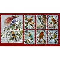 Шарджа. Птицы. ( Блок и 6 марок ) 1972 года.