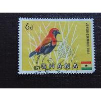 Гана. Фауна.