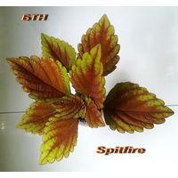Колеус Spitfire