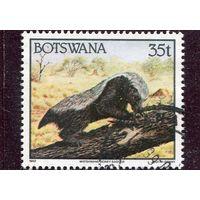 Ботсвана. Медоед
