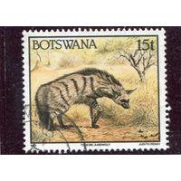 Ботсвана. Земляной волк