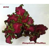 Колеус Raspberry Ruffles