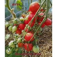 Семена томата Поцелуй Герани
