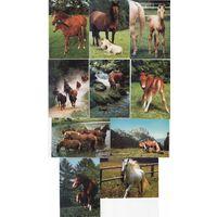 Календарики Чехии,лошади,10шт, 2011