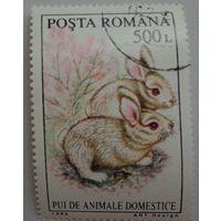 Румыния.1994.кролики