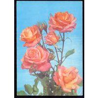 СССР 1978 ДМПК  розы чистая