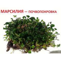 АКВАРИУМНЫЕ РАСТЕНИЯ: Марсилия-почвопокровка. НАБОРЫ растений для запуска акваса. ПОЧТОЙ и МАРШРУТКОЙ отправлю.