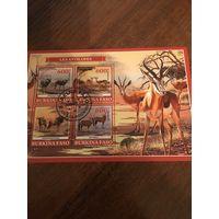 Буркина-Фасо 2019. Антилопы. Малый дист