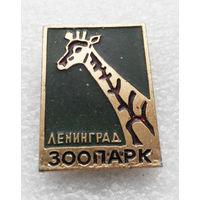 Ленинград. Зоопарк. Жираф. Животные #0160-UP6
