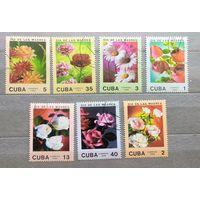 Куба.1988г. Цветы.