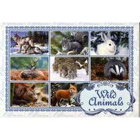 Открытка - Зимние животные Украины