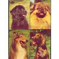Фауна собаки ф5