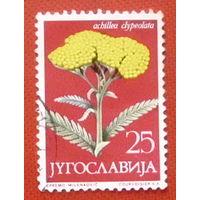Югославия. Флора ( 1 марка ) .