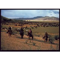 Монголия Пастухи с лассо