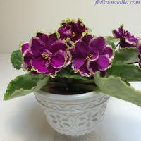 Фиалка ЕК-Малахитовая Орхидея (св.лист)