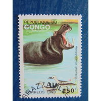 Конго 1993г. Фа