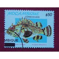 Мозамбик 1979г. Рыбы.