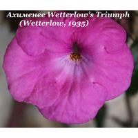 Ахименес Wetterlow s Triumph (Wetterlow, 1935)