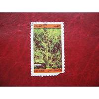 Марка Растение Оман
