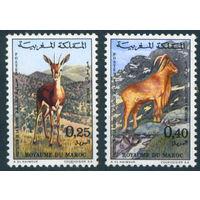Марокко 1972 Животные фауна Газель Муфлон серия 2м MNH