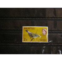 Мавритания фауна птица. Королева.