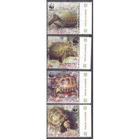 Армения фауна WWF черепаха_1