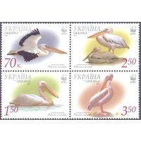Украина фауна WWF  птицы пеликан