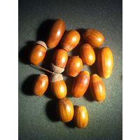 Желудь дуба (цена за 1шт)