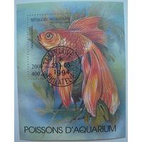 Марка Мадагаскар 1994 г. Золотая рыбка (g)